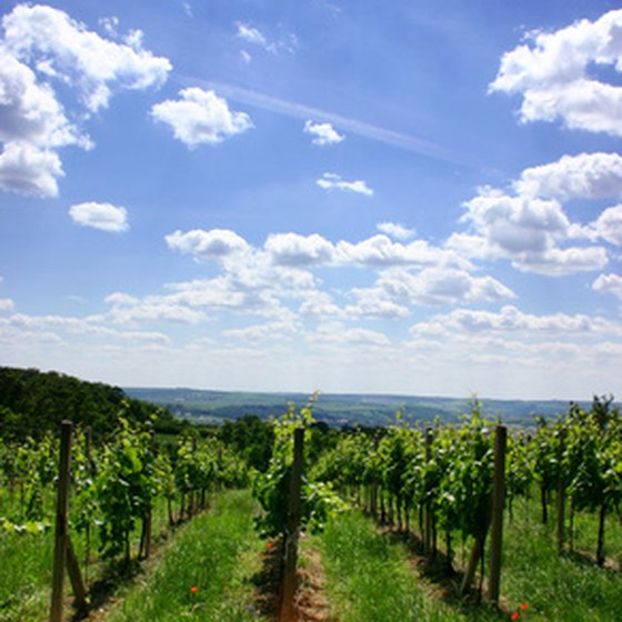Savor the wines of New York State.