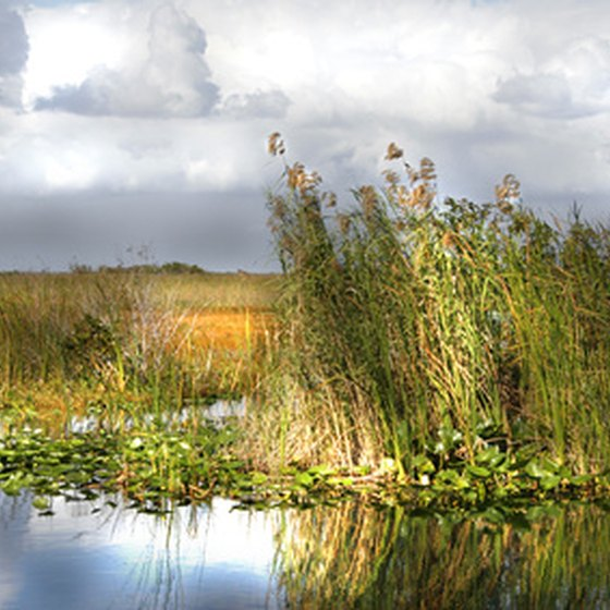 Visit the Florida Everglades.