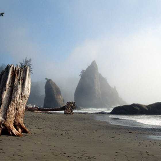 The scenery of the Oregon and Northern California coasts tends toward the mysterious and grand.