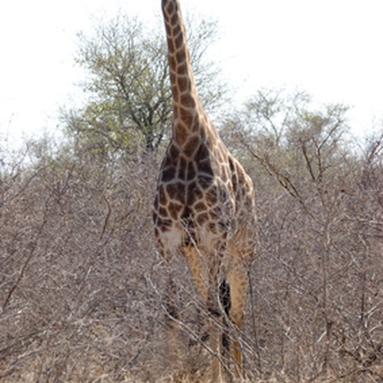 Kruger National Park is famous for its spectacular wildlife.