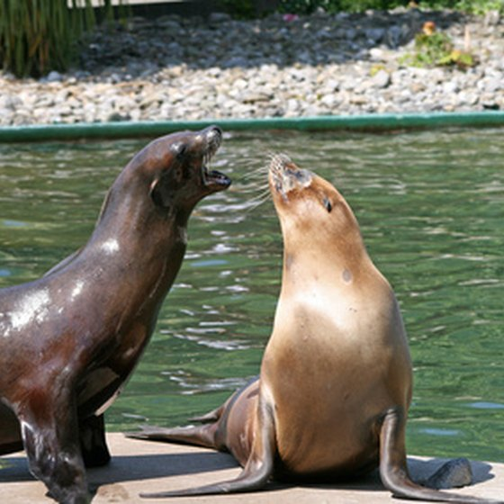 Kid getaway location options in both northern and southern California feature sea lions.