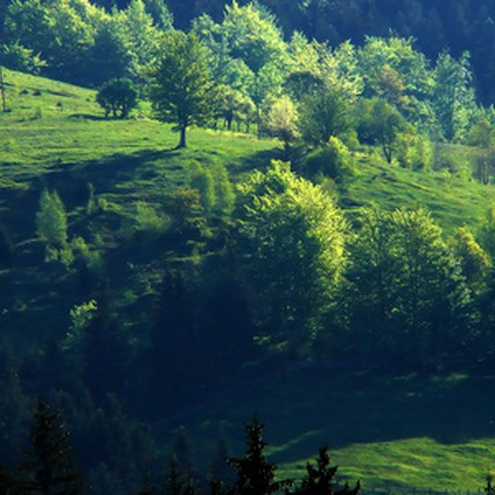 Green country hillside