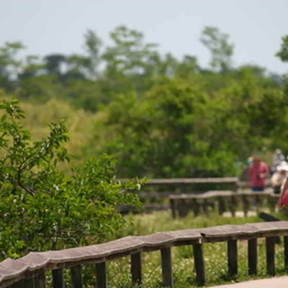 Boardwalks in Everglades National Park are great for walking and viewing wildlife.
