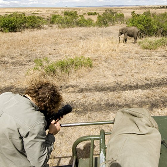 A camera is essential on an African safari tour.