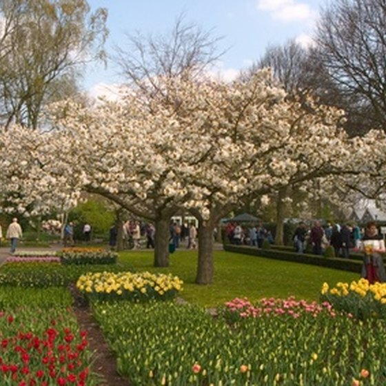 "Stroll among the aromatic blossoms at Keukenhof, Dutch for ""kitchen garden."""