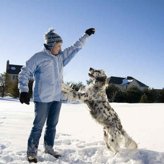 Pet Friendly Rentals in Winter Park, Colorado