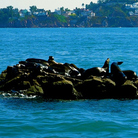 Seals frolic on a tiny islet just off the coast of Mazatlan.