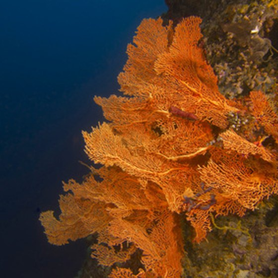 Sea fan- and coral-encrusted wall dives are part of Belize's allure.