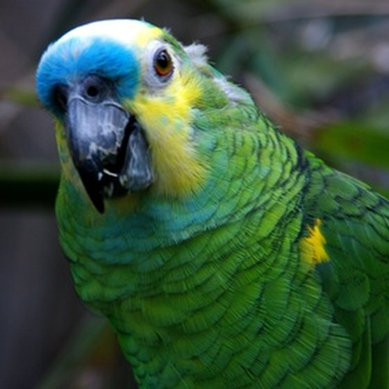 The Amazon is home to many tropical bird species.