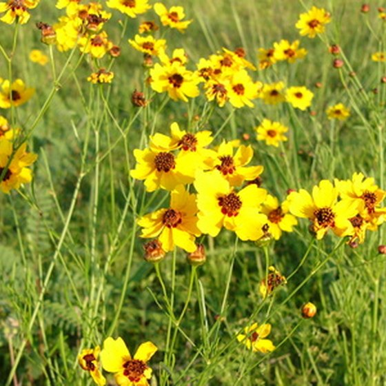 The Texas Hill Country has spectacular wildflowers in spring.