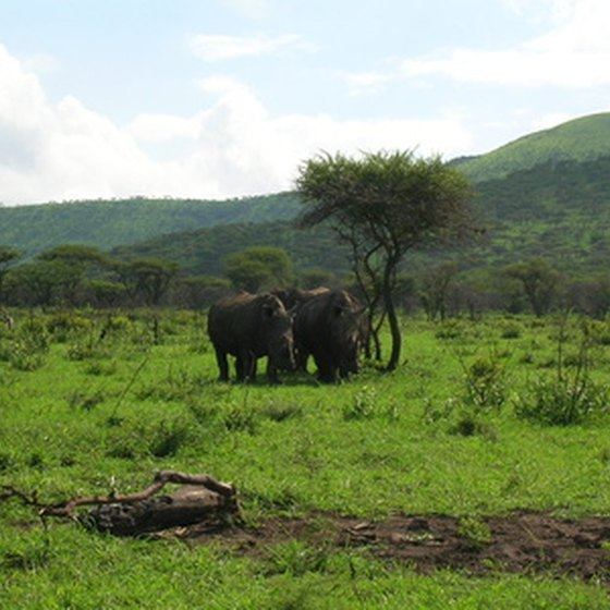African safaris offer the opportunity to see wildlife up close.