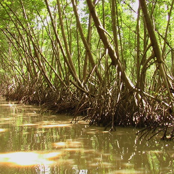 Martin County features a mangrove wilderness