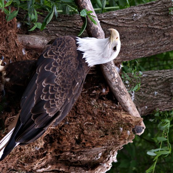 Visitors travel to the Basha Kill region of the Catskills to view eagles.