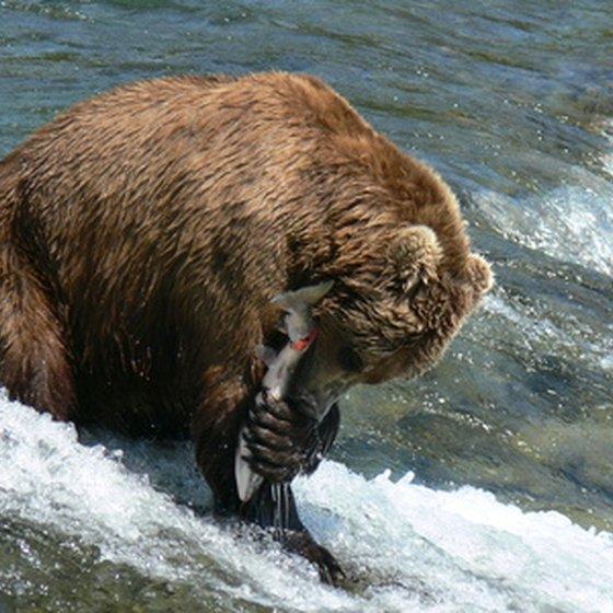 Alaska is home to the best salmon fishing in the world.