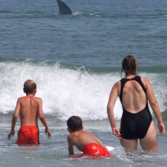 Beach-goers enjoy a fake shark pulled by a boat in nearby Ocean City, Maryland.