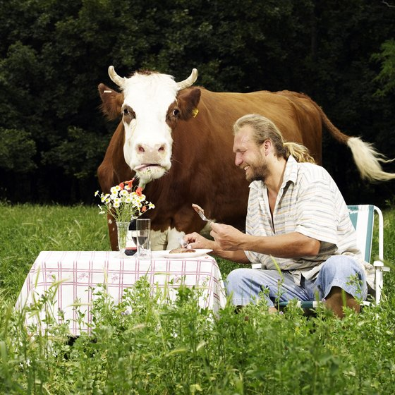 Save a cow at a vegan restaurant in Pennsylvania.