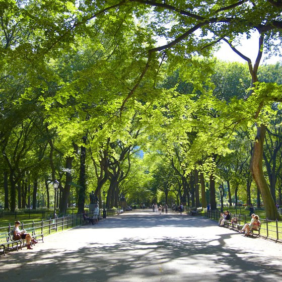 Families can enjoy a quiet afternoon in Central Park.