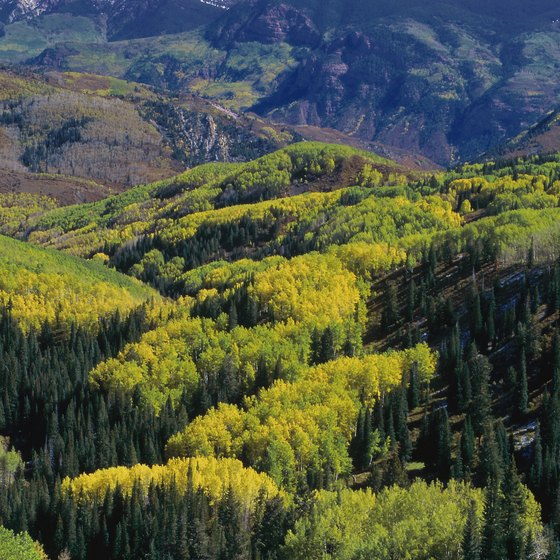 The changing aspens in White River National Forest make the area a beautiful spot in the fall.