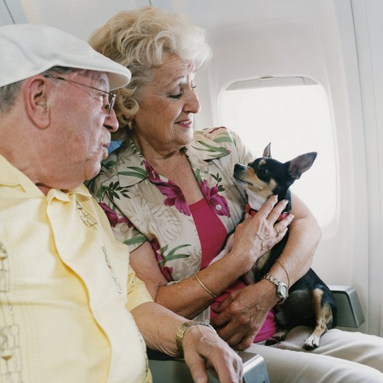 When flying to Hawaii, most airlines prohibit animals from traveling in the cabin.
