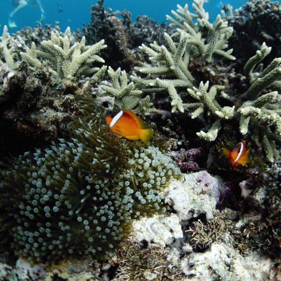 A ban on local fishing leaves the Great Astrolabe Reef teeming with marine life.