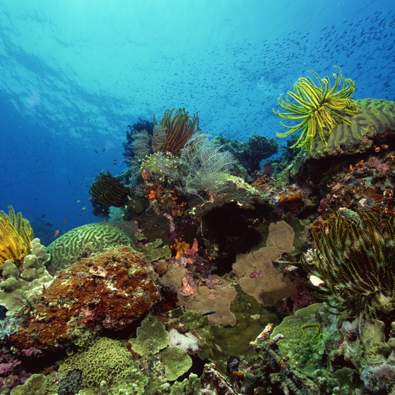 Boundless dive and snorkel sites surround the Malaysian coastline.