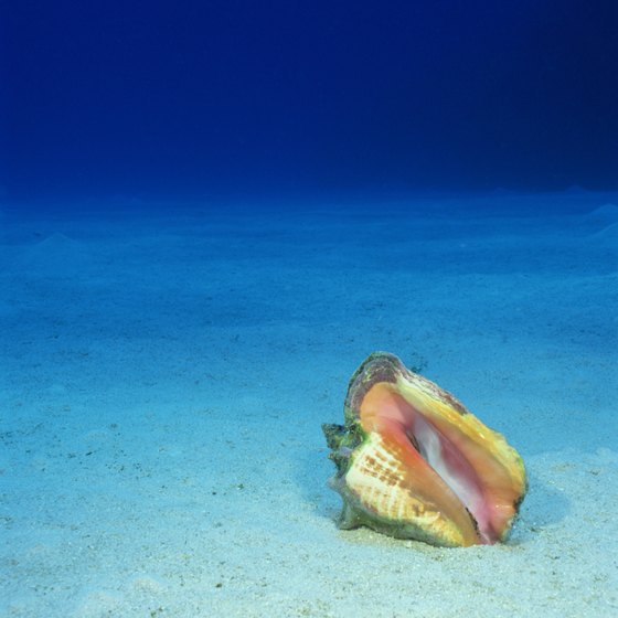 Take a scuba diving seashell tour to find real treasures.