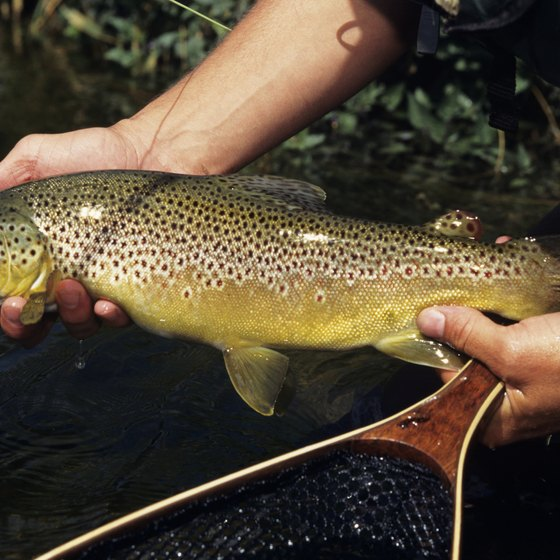 The Rochester area offers prime fishing for trout and other game fish.