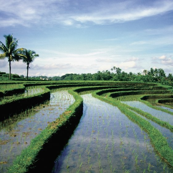 Brilliant green rice paddies surround every Balinese village.