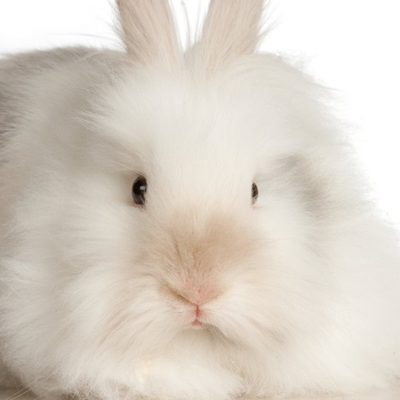 Maybe you'll get to pet a fuzzy Angora rabbit in a Vancouver petting zoo.