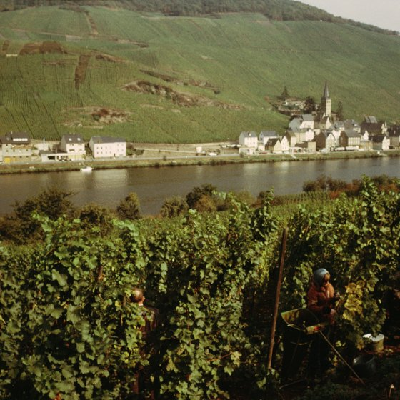 Vineyards dot the hilly shores of the scenic Mosel River in Germany.
