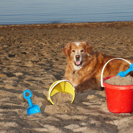 Dogs are allowed on Ocean City beaches from October 1 to April 30.