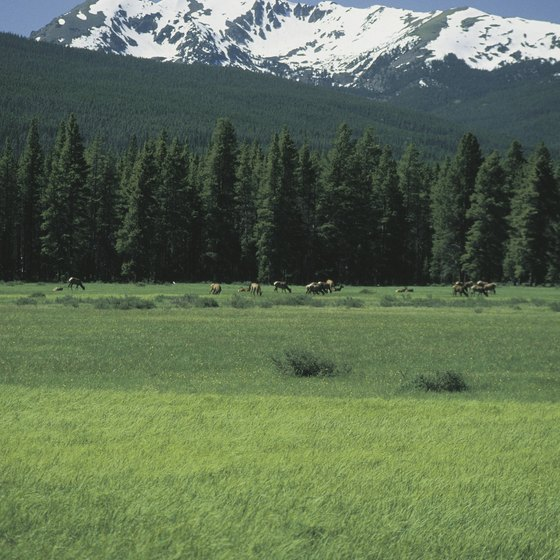 Wildlife and Alpine vistas await in Rocky Mountain National Park.