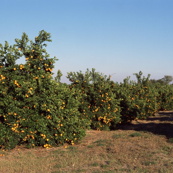 See how Florida oranges are harvested, and do some picking yourself, with a grove tour.