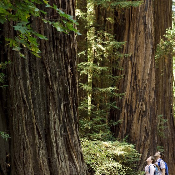 Hotels Near Redwood National Park in the Crescent City, California