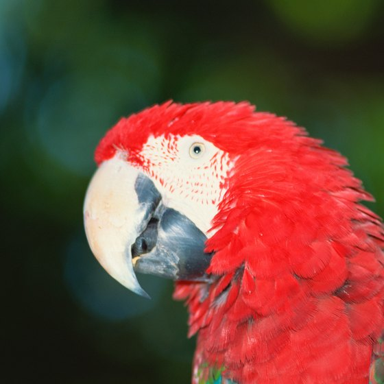 Look out for colorful macaws during an Orinoco River cruise.