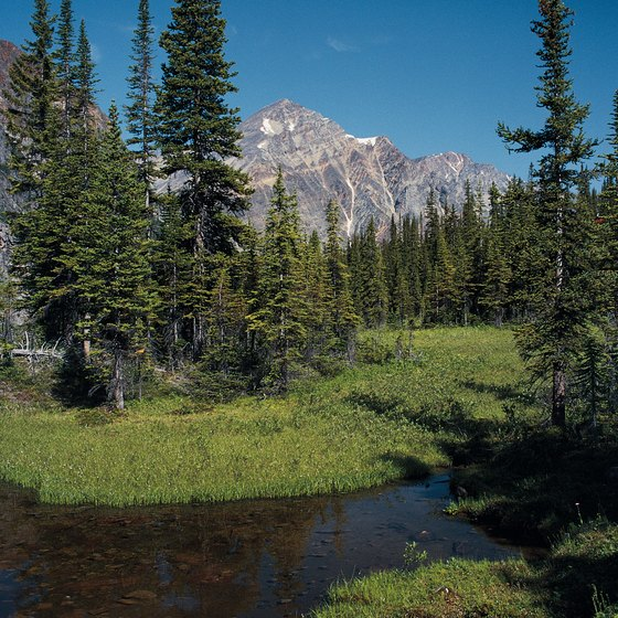 The Mt. Edith Cavell Trail takes you to panoramic views of Jasper National Park.