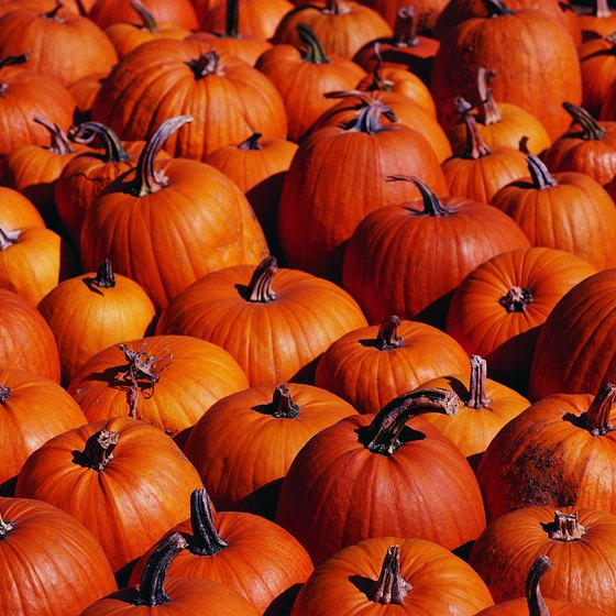 The Ludwigsburg Pumpkin Festival is the largest in the world and features more than 400,000 pumpkins and 450 different species.