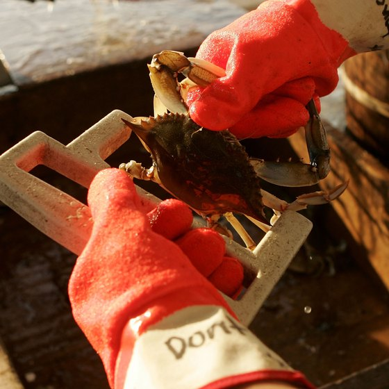Crabbing is a popular day trip for guests staying in St. Michaels.