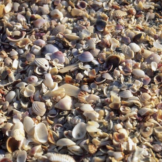 Seashells often wash up on shores of Sanibel.