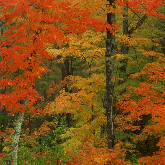Many Ontario trails go through forests filled with colorful foliage in the fall.