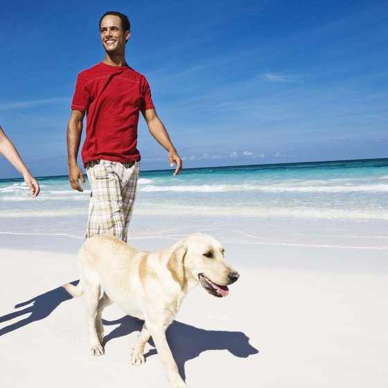 Dog beaches are fairly uncommon in the Sunshine State.
