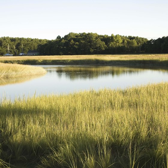 Maine has salt marsh wetlands as well as coastal waters to enjoy.