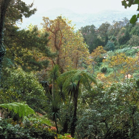 Madeira is noted for its lush tropical greenery.