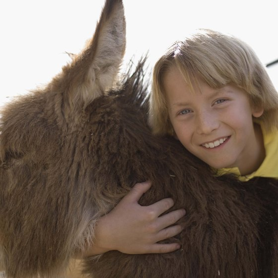 Don't be surprised if a donkey shows up in camp near Oatman.