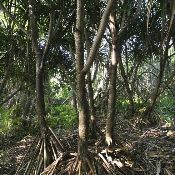 The Hawaiian Islands Are Home Of Many Native Species