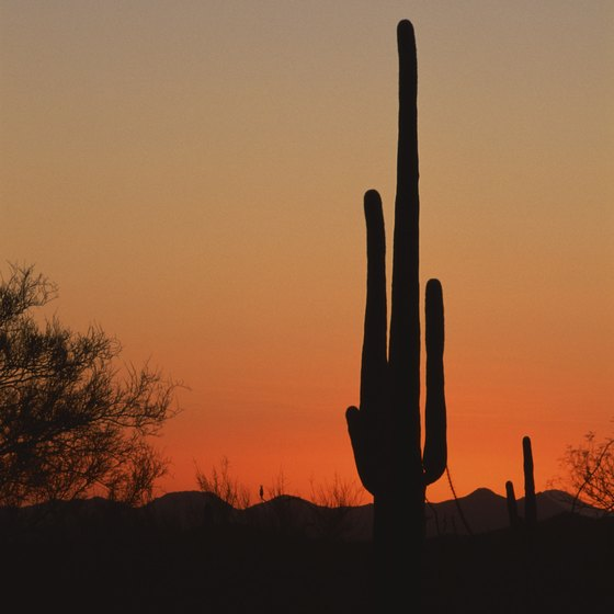 Sunrise lights up the Sonoran Desert.