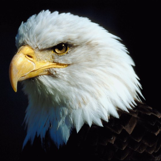 Visit the National Eagle Center in Wabasha.