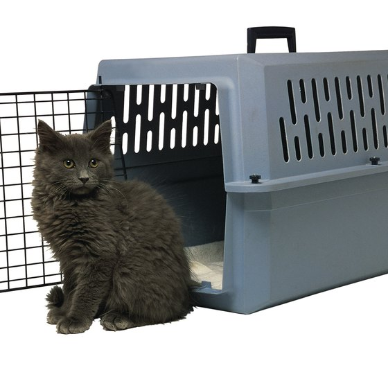 Review your airline's guidelines regarding acceptable types and sizes of pet carriers.