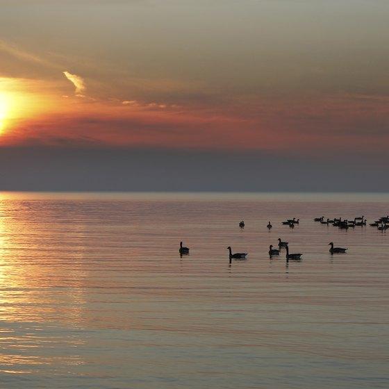 Pet-Friendly Rental Cabins on Lake Huron, Michigan | USA Today
