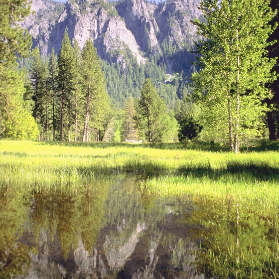 Tours for kids allow children to see the pristine wilderness of Yosemite National Park.